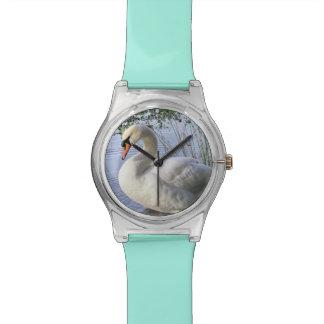 Mute Swan Watch
