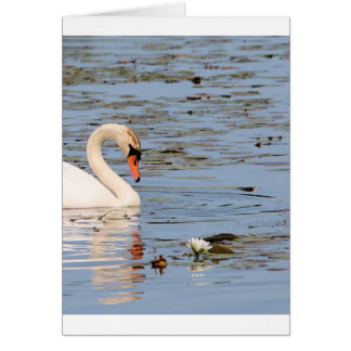 Mute Swan with lilly pad Card