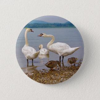 Mute swans and ducks 6 cm round badge