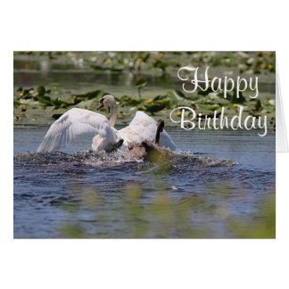 Mute swans card