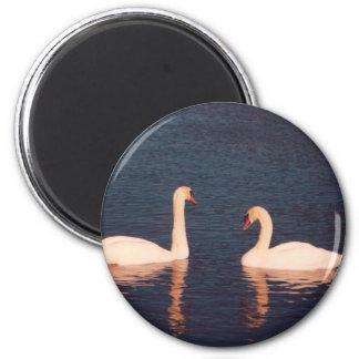 Mute Swans 6 Cm Round Magnet