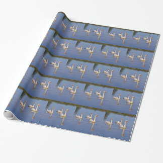 Mute swans swimming wrapping paper