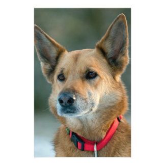 mutt dog with red collar 14 cm x 21.5 cm flyer