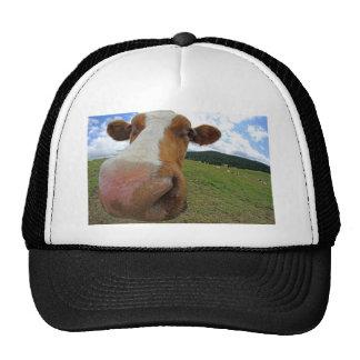Muzzle of cow cap