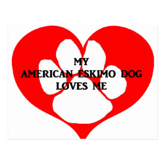 my american eskimo loves me postcard