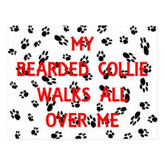 my bearded collie walks on me postcard