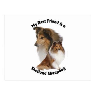 My Best Friend Shetland Sheepdog Postcard
