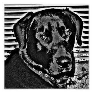 My Black Lab Poster