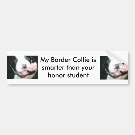 My border collie is smarter than your honor studen bumper stickers