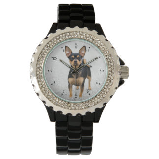 My chihuahua watch