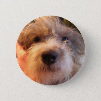 my dog einstein 6 cm round badge