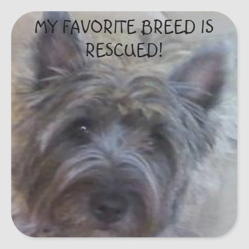 My Favorite Breed is Rescued! Square Stickers
