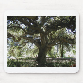 My Favorite Oak Tree Mouse Pad