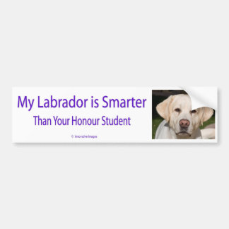 My Labrador is Smarter Than Your Honor Student Bum Car Bumper Sticker