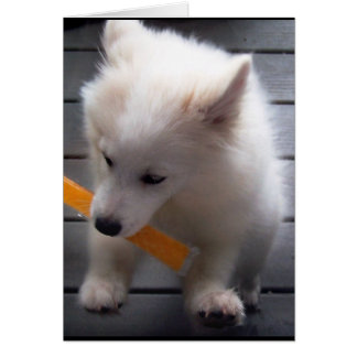 My Mini American Eskimo Card