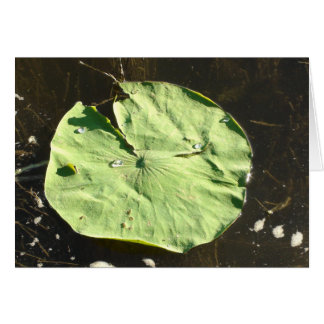 My Pad or Yours? Lilly Pad Humorous Flirty Card