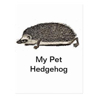 My Pet Hedgehog Postcard