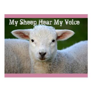 My Sheep Hear My Voice, Bible John 10:27, Custom Postcard