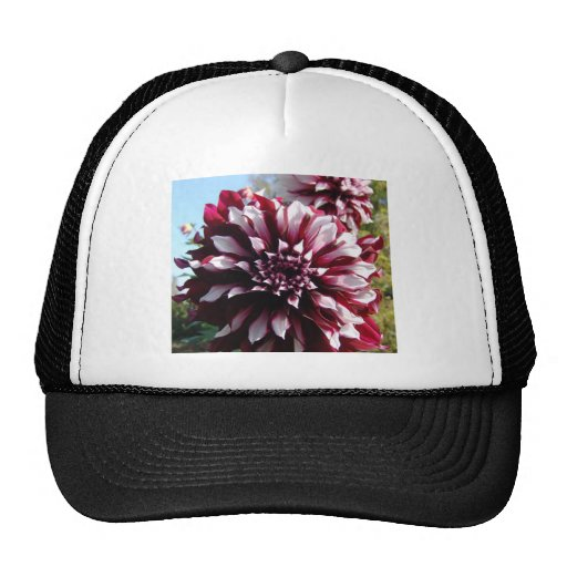 My wife's flower collection trucker hats
