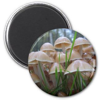 Mycena inclinata Mushroom Magnet