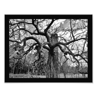 Mysterious Branches Photo Print