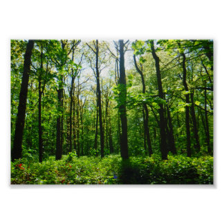 Mysterious Magical Forest Poster