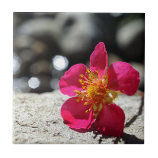 Mystery Pink Flower Ceramic Tile