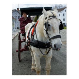 Mystic Horse Postcards
