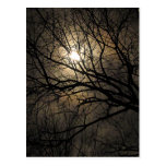 Mystical Moon Postcard
