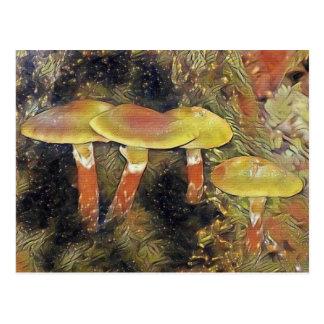 Mystical Mushrooms Postcard