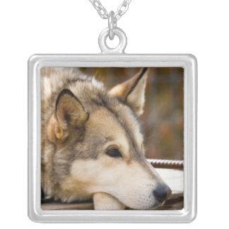 N.A., USA, Alaska. Husky sled dogs at 3 Square Pendant Necklace