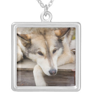 N.A., USA, Alaska. Husky sled dogs at Square Pendant Necklace