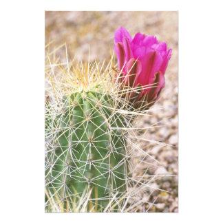 N.A., USA, AZ, Phoenix, Desert Botanical 2 Photograph