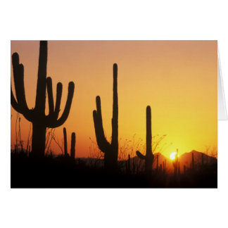 N.A., USA, AZ, Saguaro NP, Saguaro Sunset Card