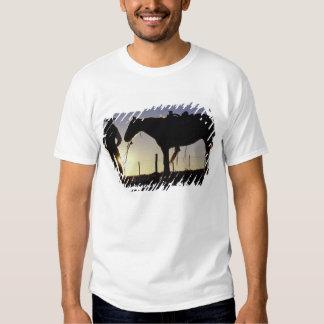 N.A., USA, Oregon, Seneca, Ponderosa Ranch, T-shirts