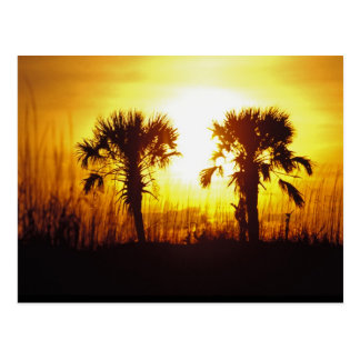 N.A., USA, South Carolina, Charleston. Sunset Postcard