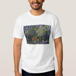 N.A., USA, Texas, Cactus surrounded by Tee Shirts