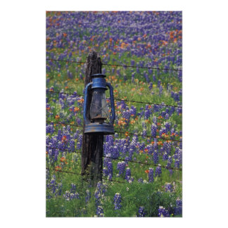 N.A., USA, Texas, Llano, Blue Lantern and Art Photo