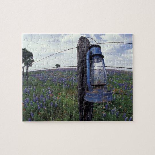 N.A., USA, Texas, Llano, Blue Lantern, Oak tree Jigsaw Puzzle