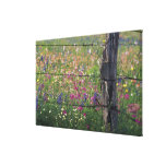 N.A, USA, Texas, Lytle, Fence post and Canvas Print