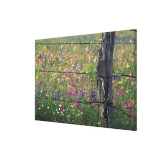 N.A, USA, Texas, Lytle, Fence post and Canvas Prints