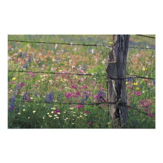 N.A, USA, Texas, Lytle, Fence post and Photo Art