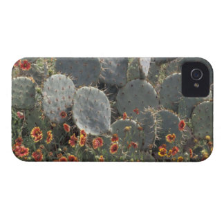 N.A., USA, Texas, Moore, Cactus and Indian Case-Mate Blackberry Case