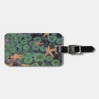 N.A., USA, Washington, Olympic National Park, 2 Luggage Tag