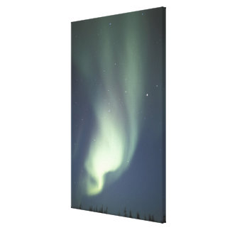 NA, Canada, Manitoba, Churchill Northern lights, Gallery Wrapped Canvas