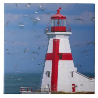NA, Canada, New Brunswick, Campobello Island. 8 Ceramic Tile