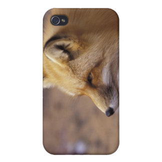 NA, Canada. Red Fox Case For iPhone 4