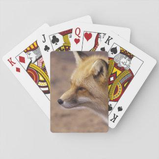 NA, Canada. Red Fox Poker Deck