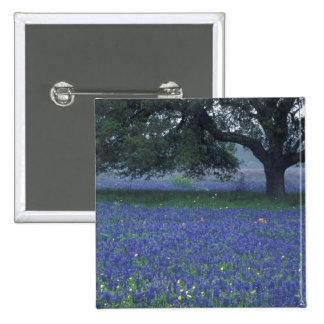 NA Texas Devine Oak and blue bonnets Buttons