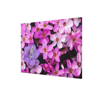 NA, USA, Alaska, Aleutian Islands, Wildflowers 2 Gallery Wrap Canvas